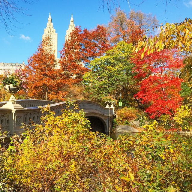 bow-bridge-central-park-fall