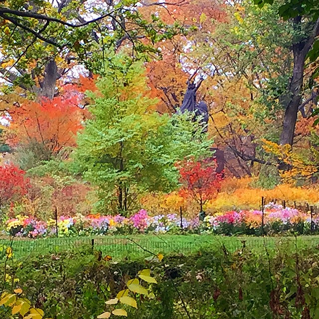 central-park-flowers-fall